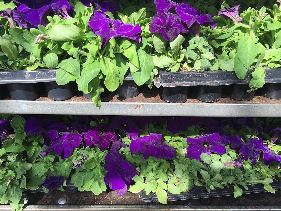 Кто продает рассаду цветов 118